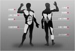 筋肉組織の図解.jpg